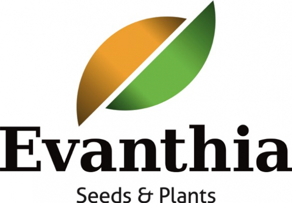 10-09-evanthia-logo-seeds-plants-584